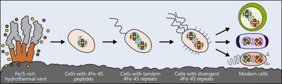 Съвременен протеин доближава учените до познанието за произхода на живота